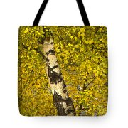 Birch Forest In Finland Tote Bag
