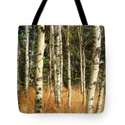 Birch Tree Abstract Tote Bag