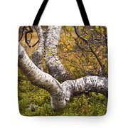 Birch Trees In Autumn Foliage Tote Bag