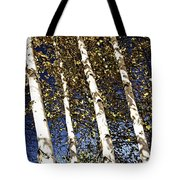 Birch Trees In Fall Tote Bag by Elena Elisseeva