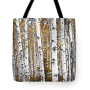 Birch Trees No.0644 Tote Bag