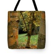 Birches In Autumn Tote Bag
