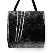 Birches In Black And White Tote Bag