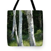 Birches On A Meadow Tote Bag