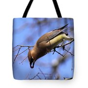 Bird - Cedar Waxwing - One At A Time Tote Bag