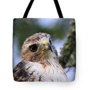 Bird - Red-tailed Hawk - Bashful Tote Bag