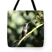 Bird - Hummingbird - The Observer Tote Bag
