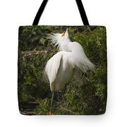 Bird Mating Display - Snowy Egret  Tote Bag