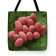 Bird Red Blood Cells Tote Bag