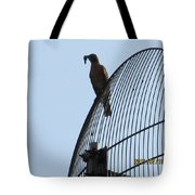 Bird With A Catch Tote Bag