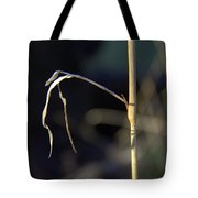 Birth Of A Scarecrow Tote Bag