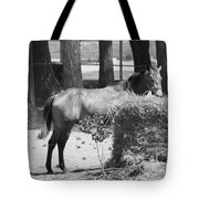 Black And White Hay Horse Tote Bag