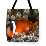 Black Anemonefish, Fiji Tote Bag