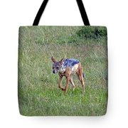 Black Backed Jackal Tote Bag