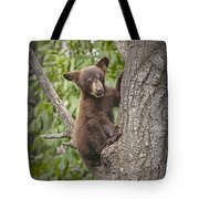Black Bear Cub Hanging On Tote Bag
