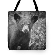 Black Bear Cub In A Pine Tree Tote Bag