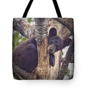 Black Bear Cub No 3224 Tote Bag