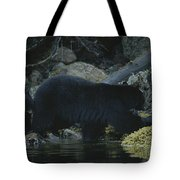 Black Bear With Her Young Cub Tagging Tote Bag