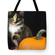Black Calico Kitten With Pumpkin Tote Bag
