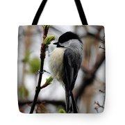 Black-capped Chickadee On Staff Tote Bag