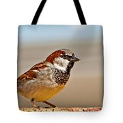 Black-chinned Sparrow Tote Bag