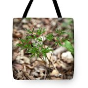 Black Cohosh Tote Bag