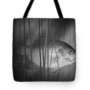 Black Crappie Or Speckled Bass Among The Reeds Tote Bag