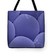 Black Fly Eye, Sem Tote Bag by Ted Kinsman