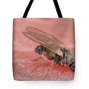 Black Fly Tote Bag