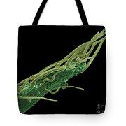 Black Locust Thorn, Sem Tote Bag