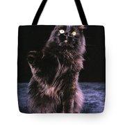 Black Persian Cat Reaches Tote Bag