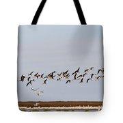 Black Skimmers In Flight Tote Bag