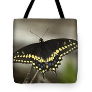 Black Swallowtail Din103 Tote Bag