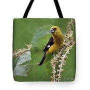 Black-thighed Grosbeak 2 - Dp Tote Bag