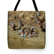 Black-throated Finches At Waterhole Tote Bag