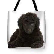 Black Toy Poodle Pup Tote Bag