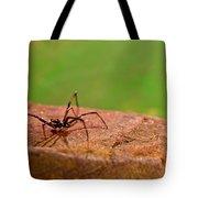 Black Widow Spider Male Tote Bag by Douglas Barnett