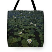 Blooming Water Lilies Fill A Body Tote Bag