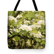 Blossoming Hawthorn Tree Tote Bag
