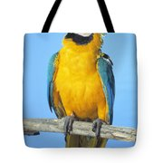 Blue-and-gold Macaw Tote Bag