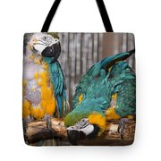 Blue And Gold Macaw Pair Tote Bag