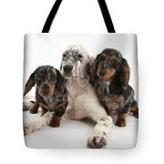 Blue Belton Setter And Dachshund Pups Tote Bag