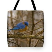 Blue Bird Perched On Willow Tote Bag