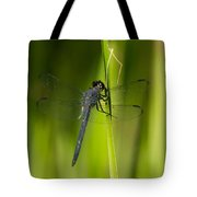 Blue Dragonfly 12 Tote Bag