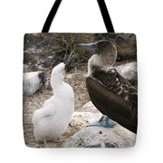Blue-footed Booby Mother And Chick Tote Bag