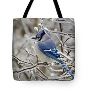Blue Jay - D003568 Tote Bag