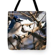 Blue Jay Staying Warm Tote Bag