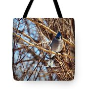 Blue Jay Thinking Tote Bag
