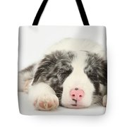 Blue Merle Border Collie Pup Tote Bag