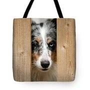 Blue Merle Sheltie Tote Bag by Kati Molin